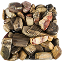 Petrified Wood Tumbled Stone - Madagascar